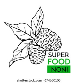 Hand drawn vector icon superfood noni . Sketch Illustration in vintage style. Design Template Healthy food.