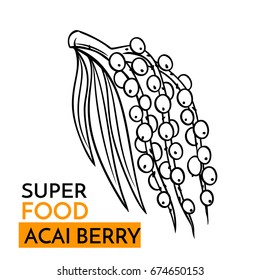 Hand drawn vector icon superfood acai berry. Sketch Illustration in vintage style. Design Template Healthy food.