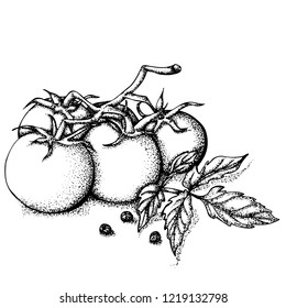 Hand drawn vector illustration. Branch of red tomatoes isolated on white background.