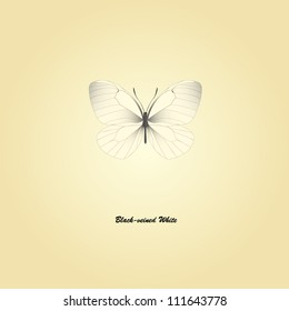 hand drawn vector illustration of butterfly
