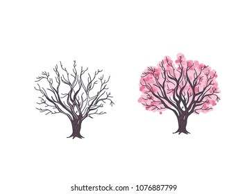 Hand drawn vector illustration of the cherry tree, tree without leaves in winter and tree in spring blooming with pink flowers.