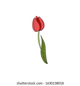 Hand drawn vector illustration color doodle of  tulip  with buds, leaves isolated on white background. Floral elements for greeting card, women day, mother day, textile, print, invitation, flyer