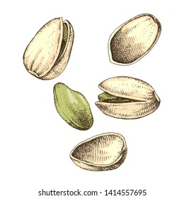 Hand drawn vector illustration of colorful pistachio nuts falling