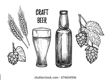 Hand drawn vector illustration - Craft beer (malt, hop, glass, bottle). Octoberfest. Alcoholic beverages. Design elements in engraving style. Perfect for invitations, greeting cards, posters, prints