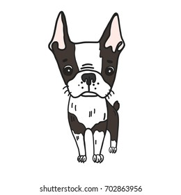 Hand drawn vector illustration of cute boston terrier dog. Cartoon black and white colored puppy isolated portrait. Could be used as logo, icon, book picture.
