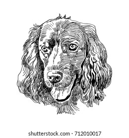 Hand drawn vector illustration English Cocker Spaniel. Sketch style dog. Realistic Symbol of 2018 new year. Animal portrait.