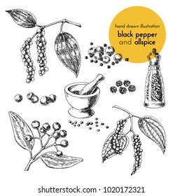 hand drawn vector illustration of herbs and spices. Vintage graphic set illustration of black pepper and allspice. set of fruits and herbs spices
