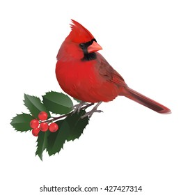 Hand drawn vector illustration of a male Northern cardinal and a holly twig.Transparent background, realistic representation.