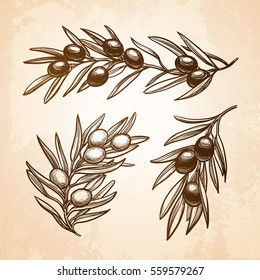 Hand drawn vector illustration of olive branches. Old paper background. Retro style.