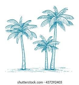 Hand drawn vector illustration of palm trees  isolated on white background. Sketch. Retro style.