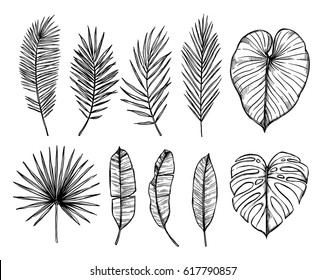 Hand drawn vector illustration - Palm leaves (monstera, areca, fan, banana). Tropical design elements. Perfect for prints, posters, invitations etc