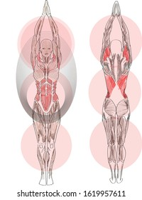 Hand drawn vector illustration poster design. Anatomy analysis yoga geometric sacral drawing art. Human body front and back active muscles hands up asana. Sport Woman balance doing Mountain pose.