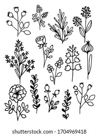 Hand drawn vector illustration. Set of simple flowers, grass, twigs. Black lines on white background, sketch, Doodle style.