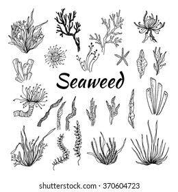 Hand drawn vector illustration - Set with seaweed. Sketch