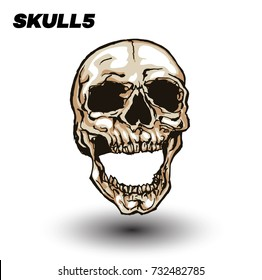 Hand drawn vector illustration of skull isolated on white background.