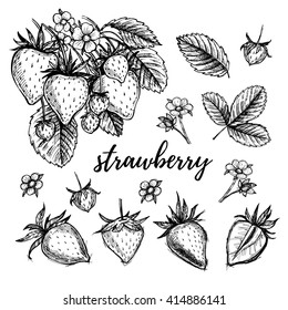 Hand drawn vector illustration - Strawberry set (plant, berries, leaves, bloom). Sketch collection.