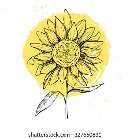 Hand drawn vector illustration - Sunflowers. Vintage