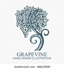 Hand drawn vector illustration of vineyard and grapes. Vine sketch isolated on old paper background.