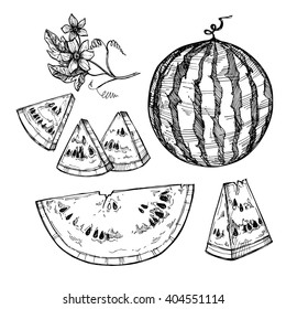 Hand drawn vector illustration - watermelon and slices with seeds. Flowering branch. Design elements in sketch style