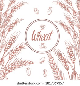 Hand drawn vector illustration of wheat stems. Label lettering with space for text