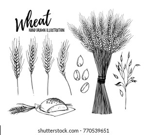Hand drawn vector illustration - Wheat. Rustic design elements (bread and stalks of cereals). Perfect for cards, posters, prints, advertising, leaflets, menu
