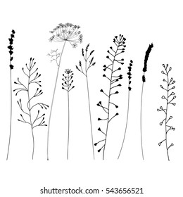 Hand drawn vector illustration of wild flowers, herbs and grasses.Thin delicate lines silhouettes of different plants - shepherds purse, lavender, dill, queen anne lace.Isolated on white background