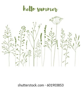 Hand drawn vector illustration of wild flowers, herbs and grasses.Thin delicate lines silhouettes of  lavender and other plants in  green .Isolated on white background