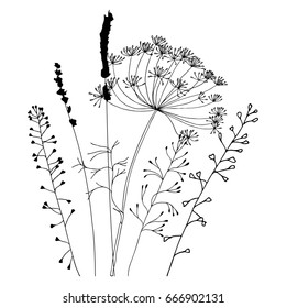 Hand drawn vector illustration of wild flowers, herbs and grasses. Thin delicate lines silhouettes of different plants - shepherd's purse, lavender, dill or fennel.