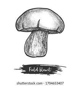 Hand drawn vector illustration of wood or field blewit. Blue-leg mushroom sketch. Forest shroom for vegetarian meal or recipe cook book. Fungus with cap or autumn, fall plant. Edible fungi. Botany