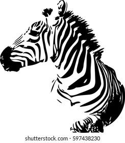 Hand drawn vector illustration of zebra