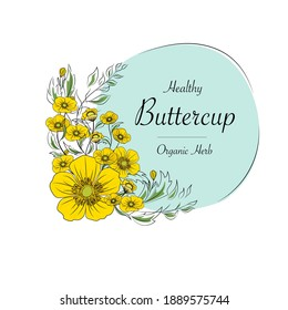 Hand drawn vector illustration.buttercup flower vector.Design for package Vector floral background with hand-drawn buttercup flowers.