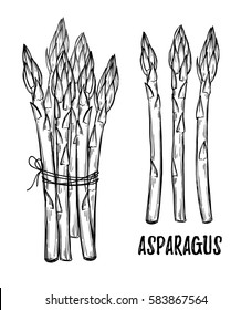 Hand drawn vector illustrations - asparagus collection. Design elements in sketch style. Perfect for posters, packing, restourant menu, brochures, flyers