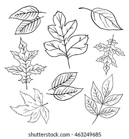 Hand drawn vector illustrations. Set of fall leaves. Forest design elements.