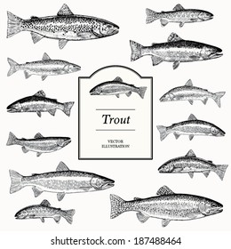 Hand Drawn Vector Illustrations of Trout (Brook, Lake, Bull, Golden, Brown and Rainbow)