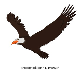 Hand drawn vector image of flying Eagle bird on white background. Isolate the image from background and use for children alphabet kearning book. Alphabet E learning picture.