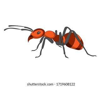 Hand drawn vector image of red Ant on white background. Isolate the image from background and use for children alphabet kearning book. Alphabet A learning picture.