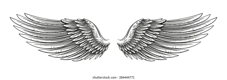 Hand drawn vector open wings in a sketchy stroked style isolated on white.