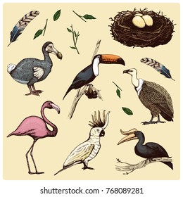 hand drawn vector realistic bird, sketch graphic style, set of domestic. griffon vultures, cockatoo parrot. rhinoceros hornbill, toco toucan, flamingo and extinct species. moa, dodo and feather.