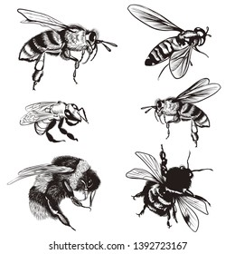 Hand drawn vector set of bees, bumblebee, high detailed insects for design
