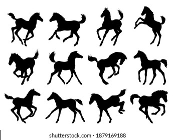 Hand drawn vector silhouette of  foals isolated on white background. Black and white  stock illustration of baby horse.