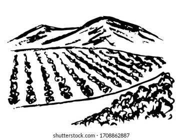 Hand drawn vector simple charcoal pencil drawing. Vineyard landscape, rows of grape bushes, perspective, rural road, outlines of mountains on the horizon. Engraving style, label printing, wine list.