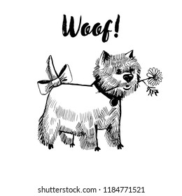 Hand drawn vector skech of funny white terrier dog