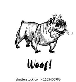 Hand drawn vector skech of funny bulldog