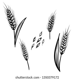 Hand drawn vector sketch illustration of  set wheat isolated on white background retro style.