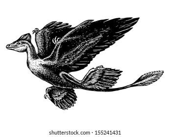 hand drawn, vector, sketch illustration of Microraptor