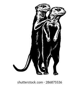 Homo Otter suku puoli