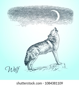 Hand drawn vector sketch of wolf. Howling wolf. Moon on the night