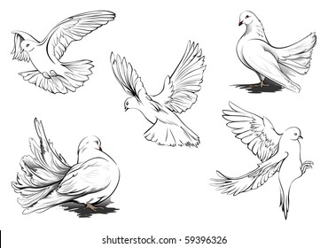 hand drawn vector sketches of beautiful white doves in different positions all doves are in
