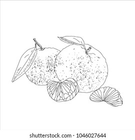 Hand drawn vector summer citrus. Lemon sketch. Linear illustration.