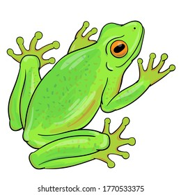 Hand drawn vector of tree frog isolated on white background. Original stock illustration of amphibian.